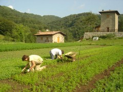 Comunicazione Enti ed Associazioni agricole - 3° aggiornamento multifunzione.