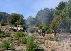 Protesta del Sindaco all'Ente Foreste per mancata concessione legnatico